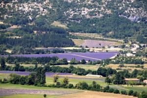 patchwork lavendar