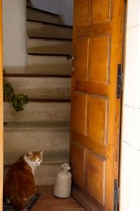 sault kitty 2